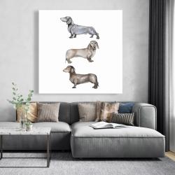 Canvas 48 x 48 - Small dachshund dog