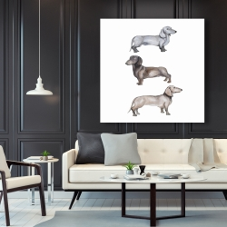 Canvas 48 x 48 - Dachshund dogs