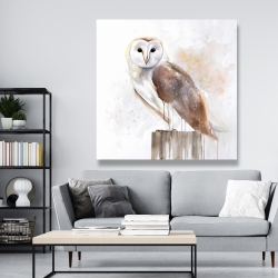 Canvas 48 x 48 - Barn owl