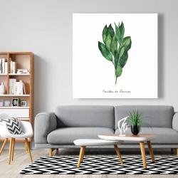 Canvas 48 x 48 -  bay leaves bundle - fr