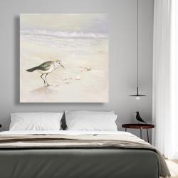 Canvas 48 x 48 - Semipalmated sandpiper on the beach