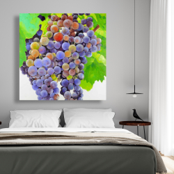 Canvas 48 x 48 - Bunch of grapes