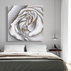 Canvas 48 x 48 - White rose delicate