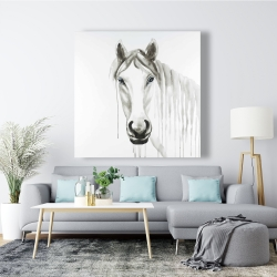 Canvas 48 x 48 - Solitary white horse