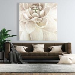 Canvas 48 x 48 - Delicate chrysanthemum
