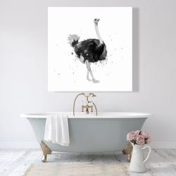 Canvas 48 x 48 - Proud ostrich