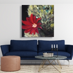 Canvas 48 x 48 - Echinopsis red cactus flower