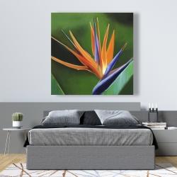Canvas 48 x 48 - Bird of paradise flower