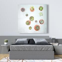 Canvas 48 x 48 - Cactus plants