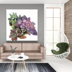 Canvas 48 x 48 - Succulent plant
