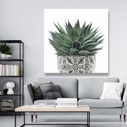 Canvas 48 x 48 - Zebra plant succulent