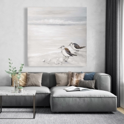 Canvas 48 x 48 - Two sandpipiers birds