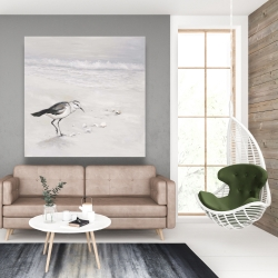Canvas 48 x 48 - Semipalmated sandpiper