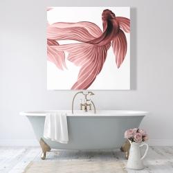 Canvas 48 x 48 - Red betta fish