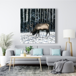 Canvas 48 x 48 - Caribou in the winter forest