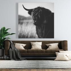 Canvas 48 x 48 - Beautiful monochrome highland cow