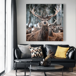 Canvas 48 x 48 - Stags