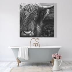 Canvas 48 x 48 - Monochrome portrait highland cow