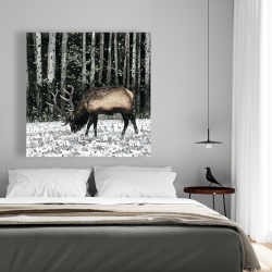 Canvas 48 x 48 - Caribou in the forest