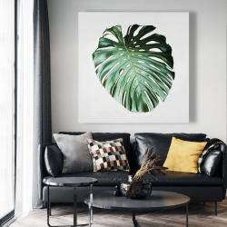 Canvas 48 x 48 - Monstera leaf