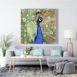 Canvas 48 x 48 - Peacock