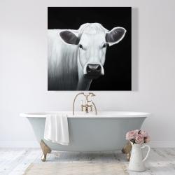 Canvas 48 x 48 - White cow
