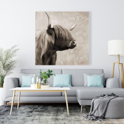Canvas 48 x 48 - Beautiful highland cattle sepia
