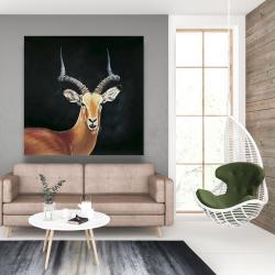 Canvas 48 x 48 - Antelope