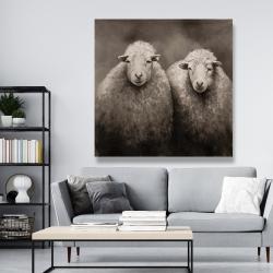 Canvas 48 x 48 - Sheep sepia