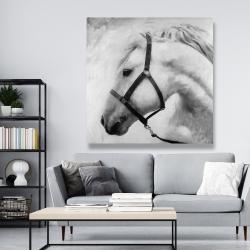 Canvas 48 x 48 - Darius the horse
