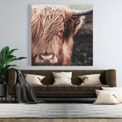Canvas 48 x 48 - Desaturated highland cow