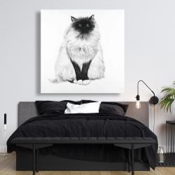 Canvas 48 x 48 - Blue eyes fluffy siamese cat