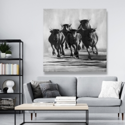 Canvas 48 x 48 - Group of bulls at galops