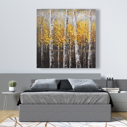 Canvas 48 x 48 - Sunny birch trees