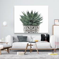 Canvas 48 x 60 - Zebra plant succulent