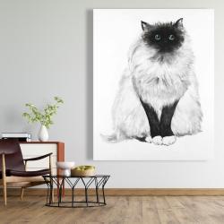 Canvas 48 x 60 - Blue eyes fluffy siamese cat