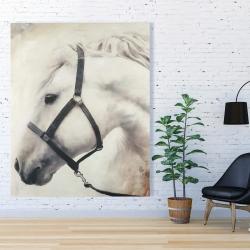 Canvas 48 x 60 - Darius the white horse
