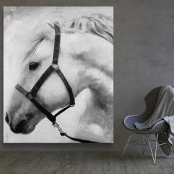 Canvas 48 x 60 - Darius the horse