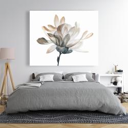 Canvas 48 x 60 - Softness