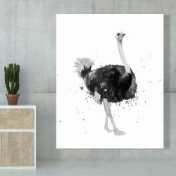 Canvas 48 x 60 - Proud ostrich