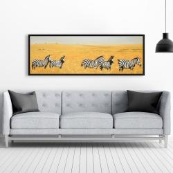Framed 20 x 60 - Herd of zebra