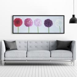 Framed 20 x 60 - Dahlia pomponowa