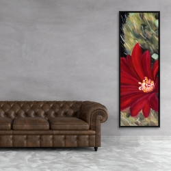 Framed 20 x 60 - Echinopsis red cactus flower