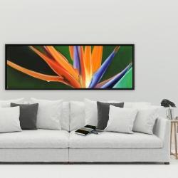 Framed 20 x 60 - Bird of paradise flower
