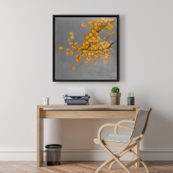 Framed 24 x 24 - Golden wattle plant with pugg ball flowers