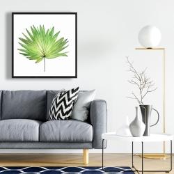 Framed 24 x 24 - Petticoat palm