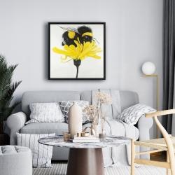 Framed 24 x 24 - Bumblebee on a dandelion