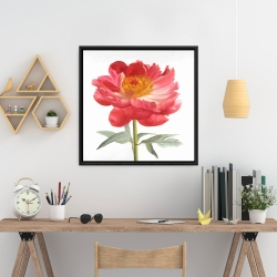 Framed 24 x 24 - Pink peony