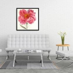 Framed 24 x 24 - Pink peony flower