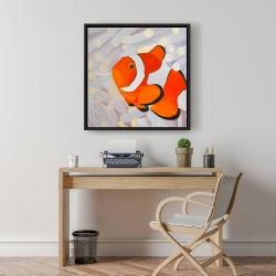 Framed 24 x 24 - Clownfish